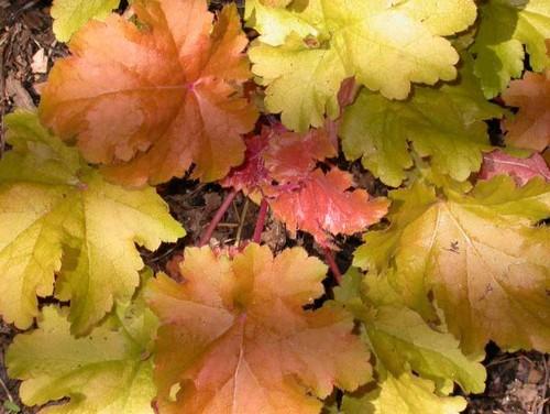 garden_fall_05