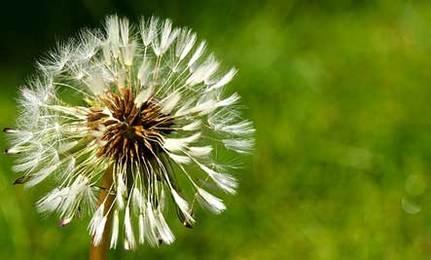 garden_weed