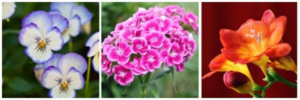 kwiatki3