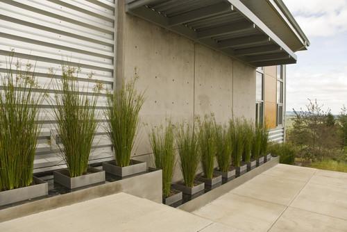 Nie tylko trawnik trawy ozdobne w twoim ogrodzie trans gaj for Modern grasses landscaping